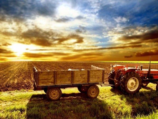 Bando 2019 credito di funzionamento per le imprese agricole