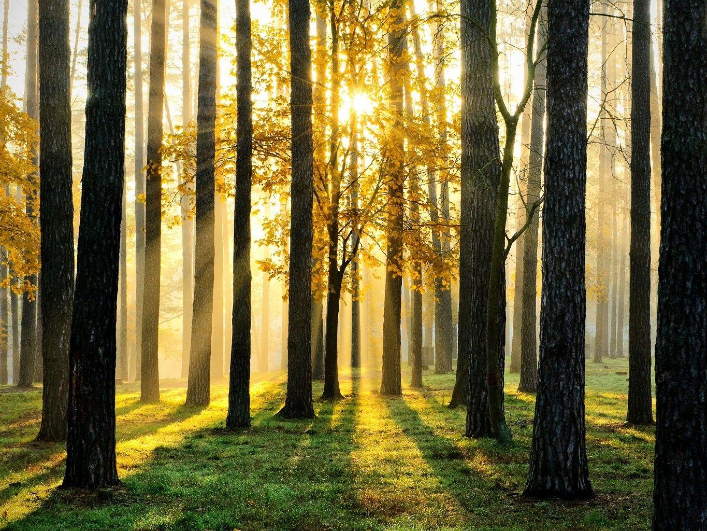 Misure forestali: bando per il territorio di «Pianura e collina