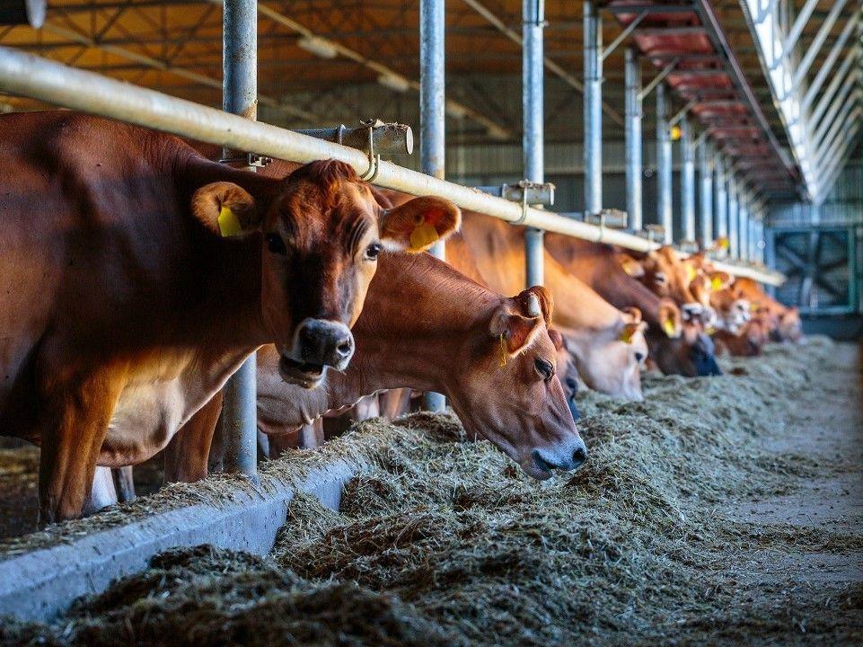 FEC 10/2020 - Manifestazione di interesse per il servizio di controllo presso i macelli sul corretto operato dei classificatori delle carcasse bovine e la corretta rilevazione dei prezzi, AI