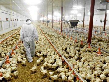 Programma regionale iniziative di biosicurezza per prevenzione e controllo diffusione delle epizoozie negli allevamenti avicoli