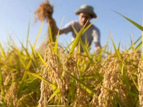 Bando credito di funzionamento per le imprese agricole