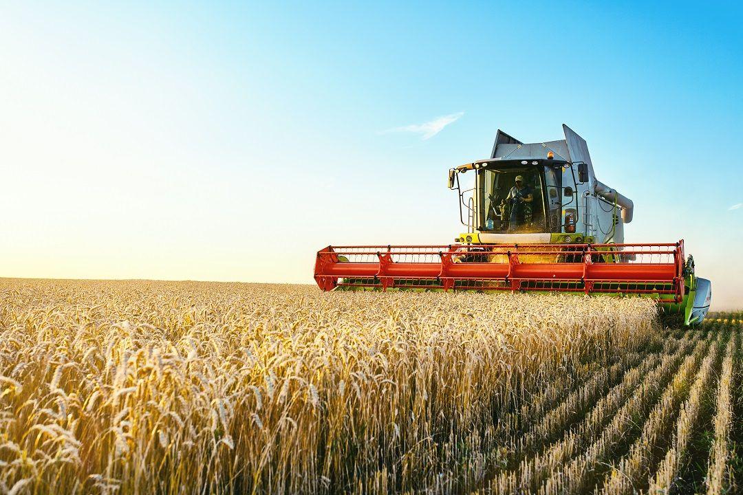 """Bando operativo per l'attuazione della  """"Misura Regionale di sostegno ai servizi di sostituzione in agricoltura"""""""